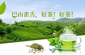 巴山雀舌茶业全国招商加盟