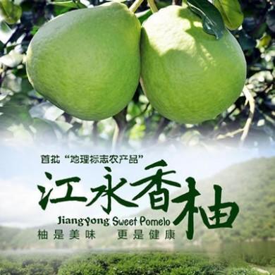 江永香柚原产地直销