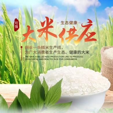 桃源可强生态大米源产地直供